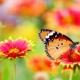 Färgglad fjäril och färgglada blommor.