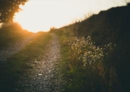 Grusstig och äng i solnedgången.