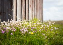 Trävägg och små blommor.
