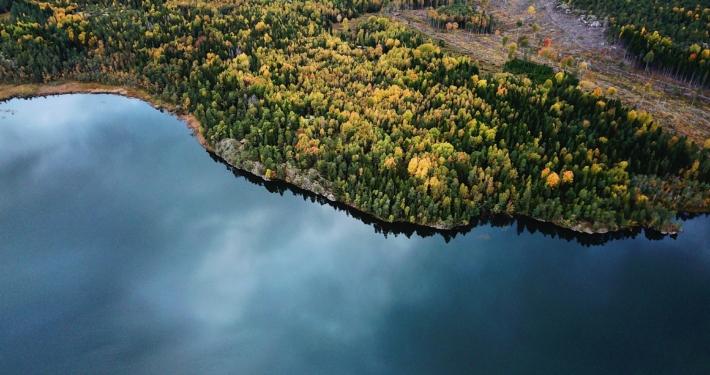 Skog och hav.