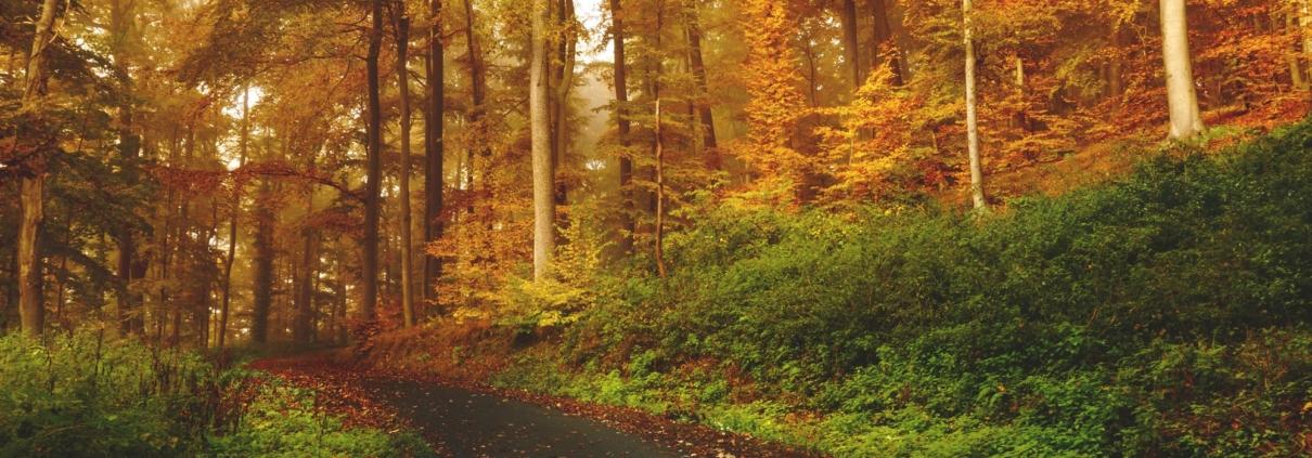 Skogsstig på hösten.