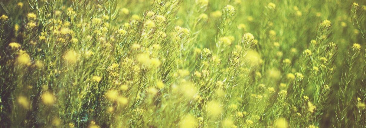 Gula och gröna blommor.