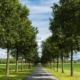 Allé med träd i Skåne